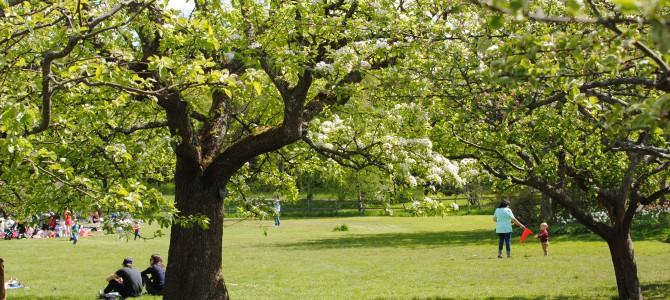 Rosendals Garden.
