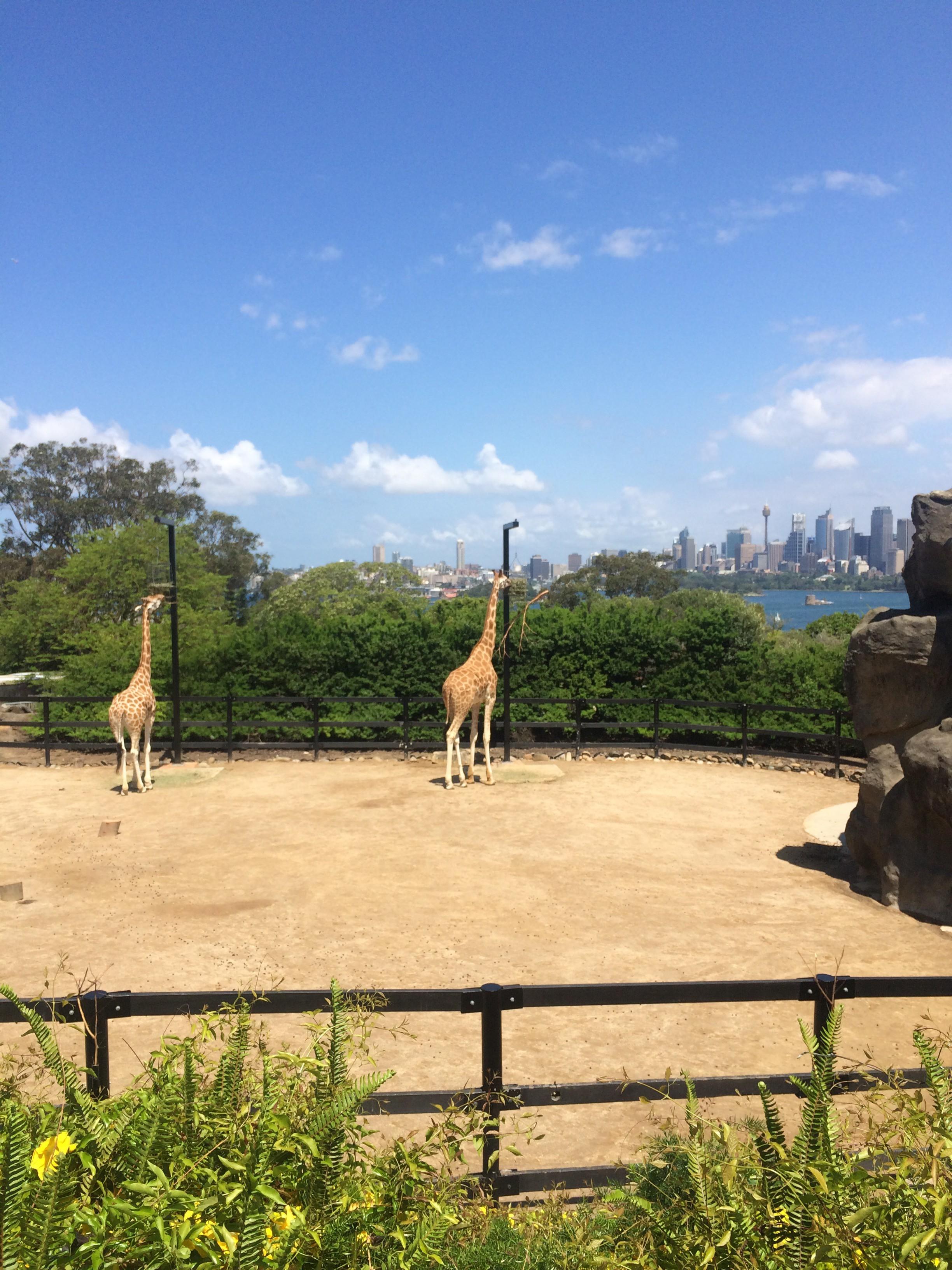 Taronga Zoo with friends