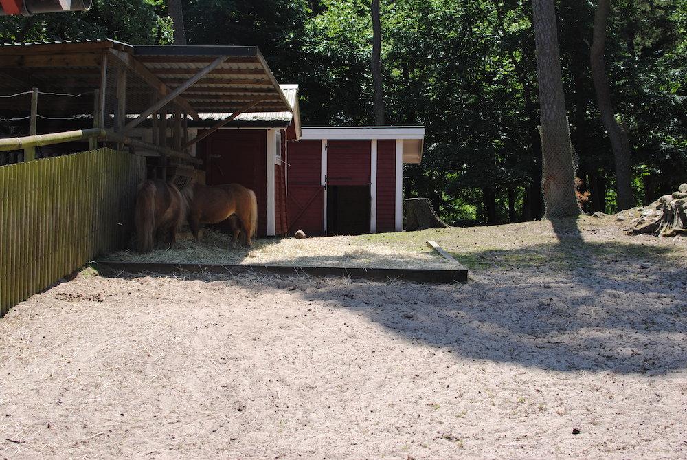 hästar hembygdsparken ängelholm